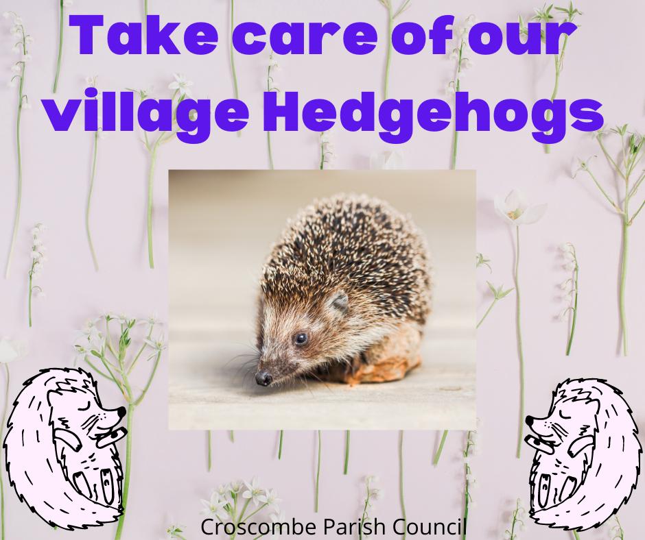 Take care of Croscombe hedgehogs - Croscombe News